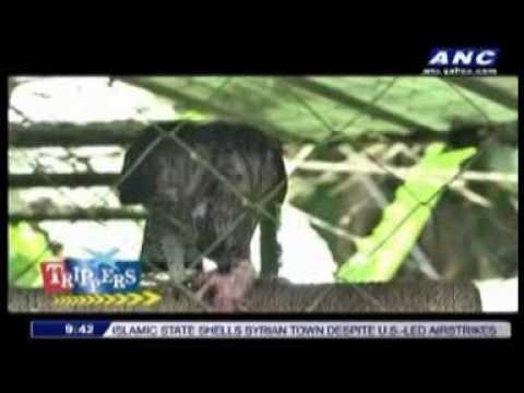 Trippers - Davao (Season 1, Episode 5)