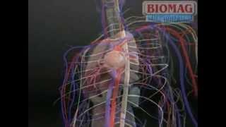 Магнитотерапия Биомаг(Официальный сайт (интернет магазин) компании БИОМАГ Оптовый - http://biomag.pro/ Розничный - http://biomag-rus.ru/, 2013-05-15T10:27:36.000Z)