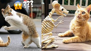 Best Funny Cat Videos That Will Make You Laugh All Day 😂😹 (And Other Pets)