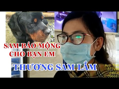 """Câu chuyện kì lạ: Chú chó Sam """"báo mộng"""" cho bạn của chủ, những hình ảnh cuối của Sam."""