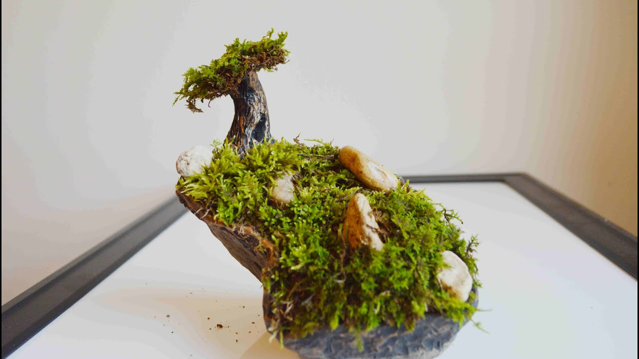 How to get moss to grow - How To Get Moss To Grow 48