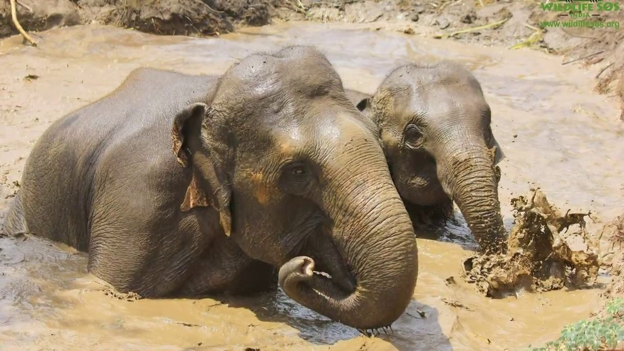 Four Elephants Begin New Lives Thanks to India's Biggest Elephant Rescue  Operation Ever