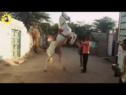 Dance Training Indian horse dance Chotala Dhamaal........