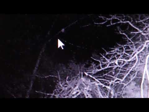 Sasquatch Watching Deer