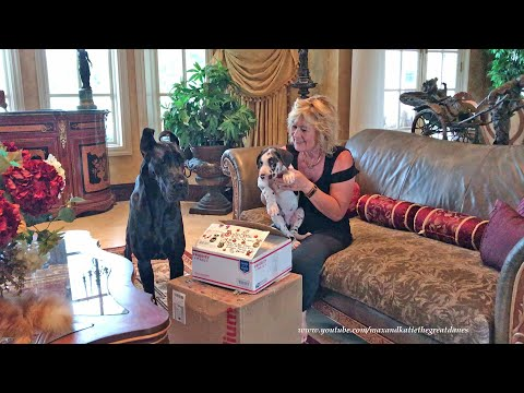 Great Danes and Cats Open Gifts From You Tube Fairy God Mother thumbnail
