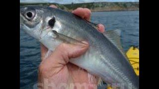 Рыбалка в черном море, ловля ставриды, ловля голяка(, 2016-06-03T16:29:35.000Z)