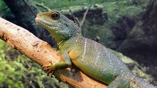 Интересные факты о Ящерицах