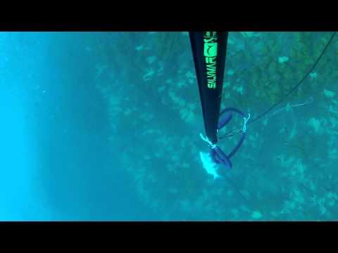 chasse sous marine en ALGERIE __3kg200  sar tombour headshot