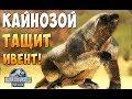 Испытываем Индоминус Рэкса! - Jurassic World the Game #35