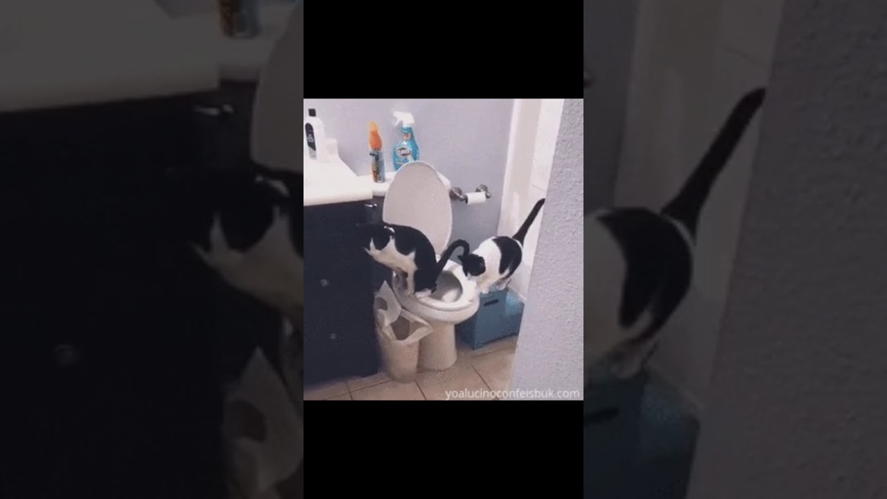 Potty Trained Cats Must Love | Preety Cats | Fully Potty Trained kittens | Funny Kittens