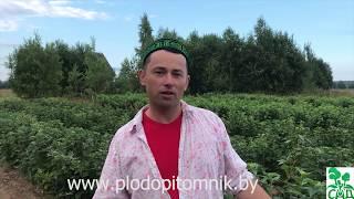 видео Описание сортов смородины