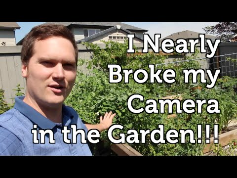 Equipment Failures, Blueberries, Lingonberries and Garden Photography