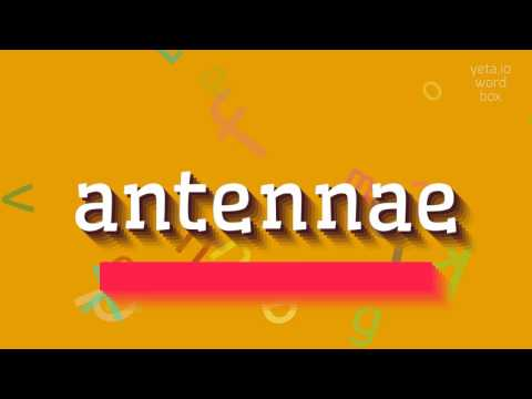 """How to say """"antennae""""! (High Quality Voices)"""