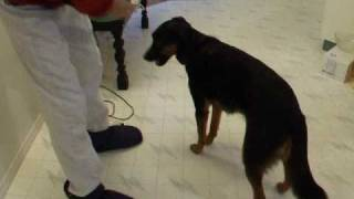 Teaching A Nose Target Your Hand: A Key Skill For Dogs