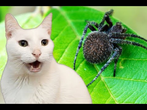 Cats Sing Itsy Bitsy Spider | Nursery Rhymes - Cats Version