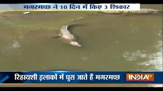 Crocodiles on roads in Vadodara
