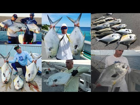MY SECRETS TO CATCH PERMIT FROM  LAND, PERMIT FISHING FL KEYS.