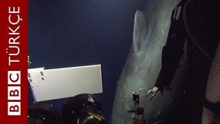 600 metre derinlikte 12 metrelik balinayla karşı karşıya - BBC TÜRKÇE