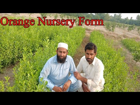 Meeting With Owner Of Orange Nursery Form | Business Idea