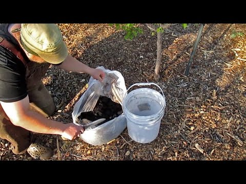 Using coffee grounds in the garden all you need to know youtube Coffee grounds for garden