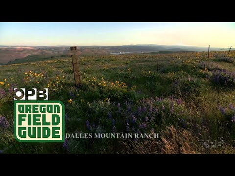 Oregon Field Guide Nature Break: Columbia Gorge and The Dalles