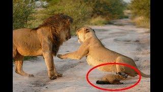 Как животные помогают друг другу!