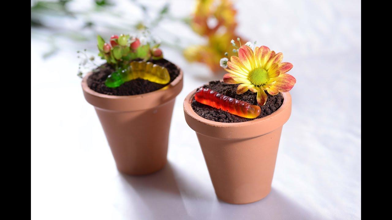 Loditos de chocolate en maceta como preparar recetas - Como cuidar hortensias en maceta ...