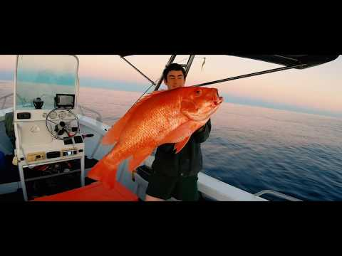 Insane Great Barrier Reef Fishing!!! (Red Emperor, Coral Trout 96cm Nannyai)