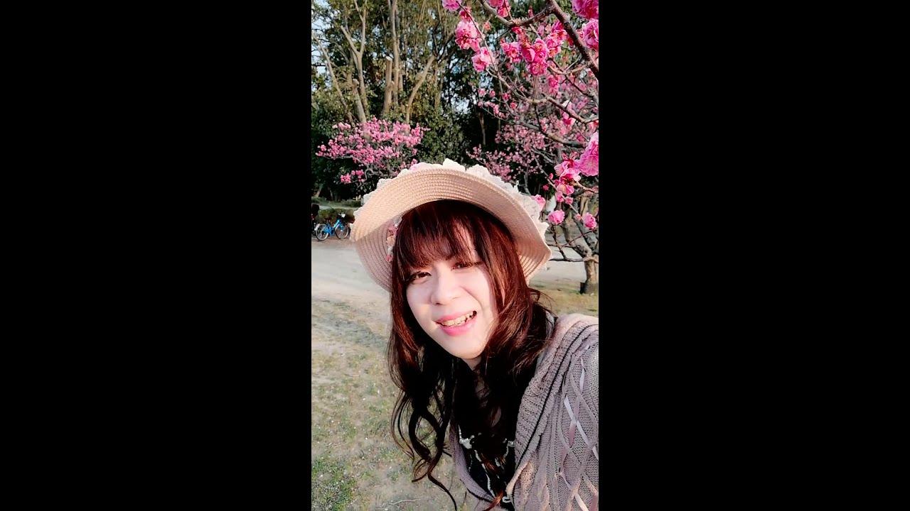 【ゆきにゃんちゃんねる】またまた梅の花で撮影してきたよ