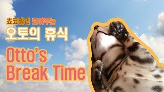 [ Bengal Otto ] Break Time (엄마집사랑 보내는 벵갈고양이 오토 휴식타임)