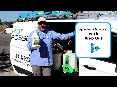 Spider control with Web Out (epiosde 59)