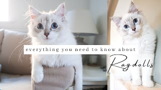 10 Things To Know About Owning A RAGDOLL Cat