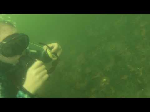 Lake Murray SANDY BEACH Scuba Dive Cleanup & Treasure Hunt Bundrick Island South Carolina