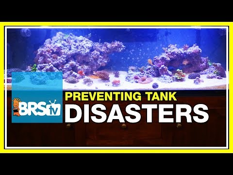Week 50: BRS160 disaster averted! Fixing catastrophes in the reef tank   52 Weeks of Reefing #BRS160