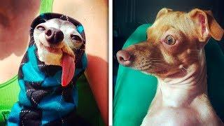 Собаки, похожие на кого угодно, только не на собак. Смешные животные 2019