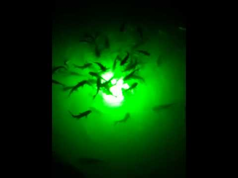 deep glow fish light - youtube, Reel Combo