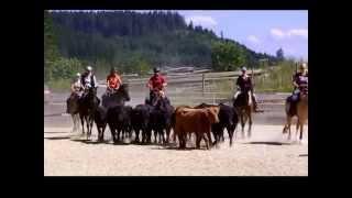 Training - Rinderarbeit zu Pferd 2015
