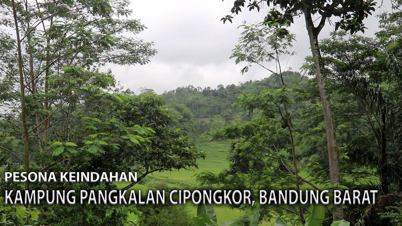 Download Pesona Alam Kampung Pangkalan Cipongkor | Bandung Barat