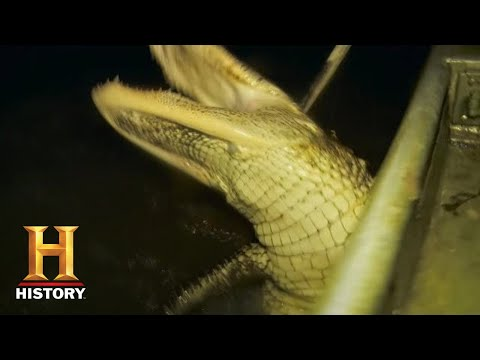 Swamp People: Nighttime Gator Hunt In Mississippi (Season 10) | History