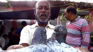 GALIFF STREET PIGEON MARKET KOLKATA INDIA   HIGH FLYING PIGEON PRICE   10TH JANUARY 2021 VISIT PART4