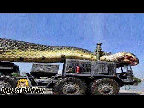 世界で発見された驚きの超巨大ヘビ5選