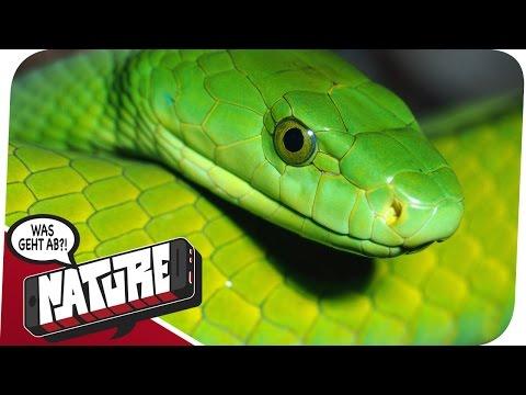 Vorsicht: Giftig! Schlangen