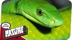 Vorsicht: Giftig! Schlangen als Haustiere - WGA NATURE
