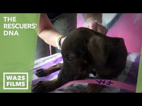 100 Homeless Puppies & She Chose To Rescue This One Sick Puppy! Ep #22 The Rescuers DNA