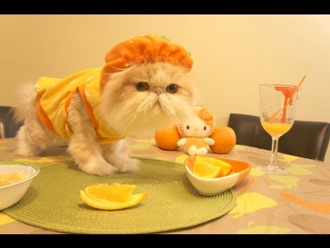 Halloween Vitamin C Kitty