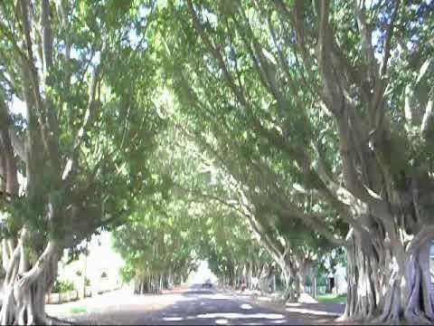 Fig Avenue Grafton.wmv