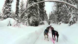 2016 Husky run in Finnland Kittilä 01.