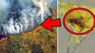 LA FORESTA AMAZZONICA STA SCOMPARENDO E IL NOSTRO PIANETA E' IN PERICOLO. ECCO COSA STA SUCCEDENDO