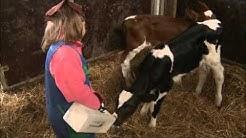 Maidon tie maitotilalta päiväkotiin