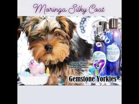 Moringa Silky Coat Grooming Dog Shampoo~Natural Organic